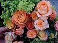Ulm - Am Tag der Rose,.JPG
