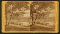Under the trees, Lincoln Park, by Copelin & Son.png