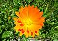 Unidentified flower - 05.jpg