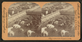 Union Stock Yards (stockyards), Chicago, Ill., U.S.A, from Robert N. Dennis collection of stereoscopic views.png