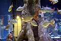 Unknown fishes in the Antalya Aquarium 20.jpg