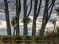 Upside down reflection of trees in a pond, The Groynes, Christchurch, New Zealand.jpg