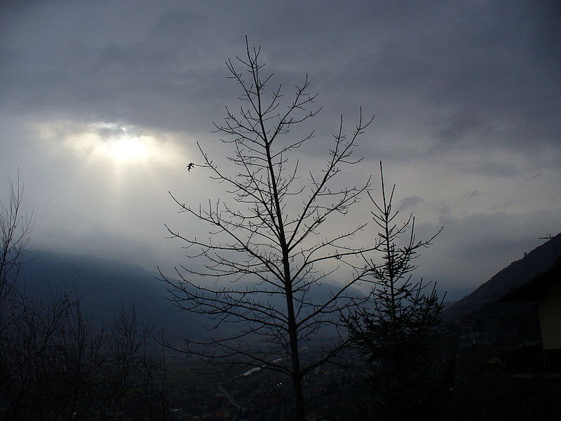 File:Valle d'aosta the last leaf.JPG
