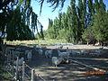Valle del Chubut (4).JPG