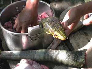 Aeta people - Varanus bitatawa stew being prepared by Aeta tribesmen