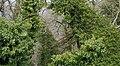 Vegetation in Manno, Switzerland.jpg