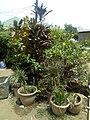 Vegetation kaduna.jpg
