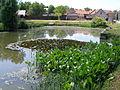 Velká Bučina, rybník.jpg