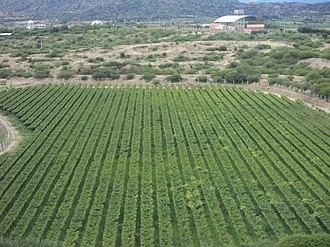 Tarija - Image: Viñedos Kohlberg