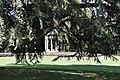 Villa Olmo - Il Cedro del Libano gioca a nascondino con il tempietto.jpg