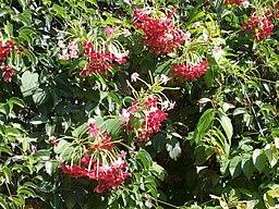 Visit in Cactus garden (Holon) 04