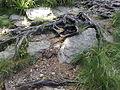 Vylet na Ostry, Sumava - 9 cervenec 2011 198.jpg