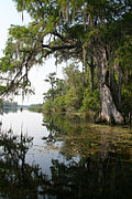 Wacissa River, Jefferson County (Florida,).jpg