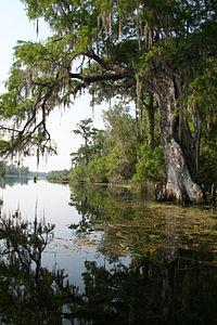 Wacissa River, Jefferson County (Florida,).jpg
