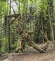 Waldmenschen Skulpturenpfad (Freiburg) jm9630.jpg