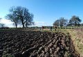 Walking the field edge - geograph.org.uk - 1144092.jpg