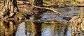 Wandeling over het Hulshorsterzand-Hulshorsterheide 07-03-2020. (actm.) 09.jpg