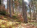 Wanderung im November - panoramio (50).jpg