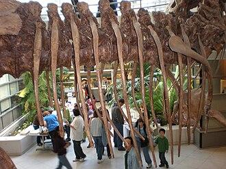 Rib cage - Tyrannosaurus rib cage, University of California Museum of Paleontology