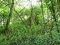Waremme-Tumuli van het Bois des Tombes (2).JPG