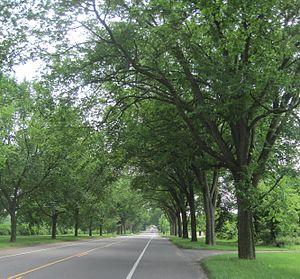 Washington Road Elm Allée - Image: Washington Road Elm Allee