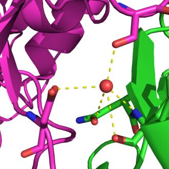 Protein design - Image: Water hbond vrc 01 gp 120