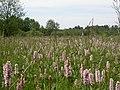Wet meadow (2144976708).jpg