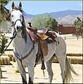White Horse, Pioneertown, CA 4-13-13a (8699579706).jpg