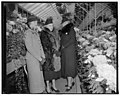 Wife of Agriculture secretary opens mum show. Washington, D.C., Nov. 4. The Annual Mum Show of the Department of Agriculture was officially opened today by Mrs. Henry A. Wallace, wife of the LCCN2016872515.jpg