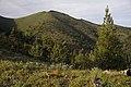Wildflowers at Fields Peak-Malheur (23636059040).jpg