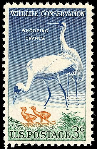 Conservation in the United States - In 1956 the US Post Office began issuing postage stamps depicting wildlife to emphasize the importance of wildlife conservation in America.