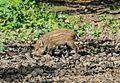 Willebadessen - 2017-05-27 - Wildgehege (10).jpg
