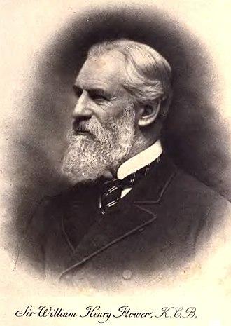 William Henry Flower - Image: William Flower KCB
