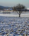 WinterLand2009-01.jpg