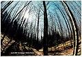 Winter Black Forest - Magic Rhine Valley Photography - panoramio.jpg