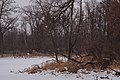 Winter Stream - Lake Elmo Park Reserve (38791605125).jpg