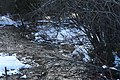 Winter creek, Drummond Island.jpg
