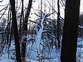 Winter in der Dübener Heide.JPG