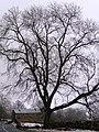 Winter tree on the B6270 - geograph.org.uk - 1728970.jpg