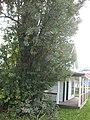 With side tree.jpg
