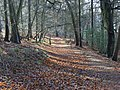 Woodland, Ibstone - geograph.org.uk - 295227.jpg