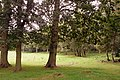 Woodland off Chalky Lane - geograph.org.uk - 927830.jpg