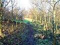Woodland path - geograph.org.uk - 1114199.jpg