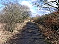 Woodland track, Dumbreck Marsh - geograph.org.uk - 1705422.jpg