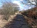 Woodland track, Dumbreck Marsh - geograph.org.uk - 1705422.jpg