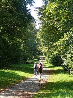 Woodland walk above Tring Park - geograph.org.uk - 649063