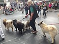 World Dog Show, Amsterdam, 2018 - 26.JPG