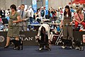 World Dog Show 2012.jpg