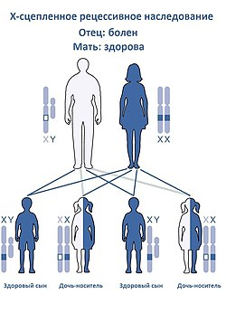 X-linked Recessive Inheritance-Ru(M).jpg