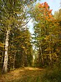 Yakshur-Bodyinskiy r-n, Udmurtskaja Respublika, Russia - panoramio (14).jpg